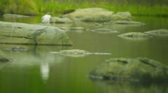White seagull sitting on a stone at the northern lake Stock Footage