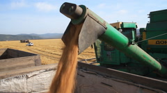 Wheat field. Unloading Grain To The Truck . Stock Footage