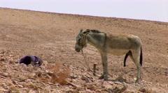 Donkey big dick Stock Footage