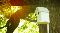 Birdhouse fitted on the trunk of a large oak Stock Footage