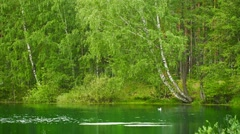 Forest lake in central russia Stock Footage