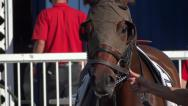 Stock Video Footage of Horse Racing - Sunny Day - 07 - Show