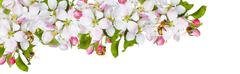 Spring flowers & bee wite background a large strip - stock photo