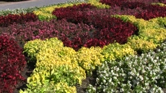 Flowerbed with red, yellow and white flovers Stock Footage