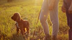 Children and dog looking forward in the field, sunset, interested Stock Footage