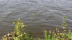 A diver dives with metal detector and penetrating river Stock Footage