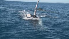 Curious Humpback Whale swims up to observation boat Stock Footage