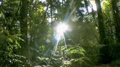 Sunlight through forest Stock Footage