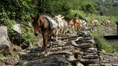 Horses walking along the road in Pokhara Trekking Stock Footage