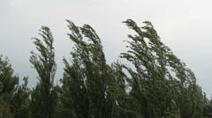 wind blown tree - stock footage