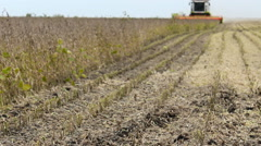 Soybean Field combine Tractor harvesting in background Stock Footage