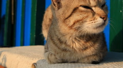 Cute cat dozing on the bench Stock Footage