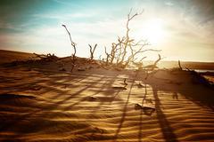 Desert landscape with dead plants in sand dunes under sunny sky Stock Photos