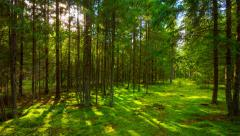 Summer forest and the sun,  4K panoramic time-lapse Stock Footage