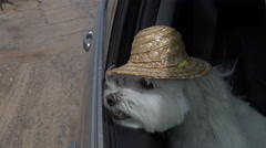4K Dog Hat Jaunty Car Ride Stock Footage