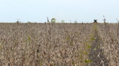 Soybean Field combine Tractor in harvest Stock Footage