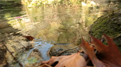 Stock Video Footage of river & flowers
