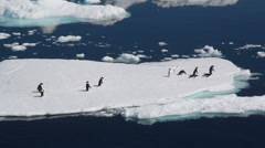 penguins together on iceberg, start running and jumping into the water - stock footage