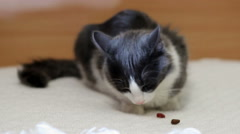 Cat eating dry food Stock Footage