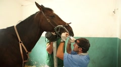 Vets horse teeth surgery Stock Footage