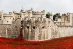 Red poppies in the moat of the Tower of London - stock photo