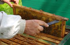 beekeeper chose honeycomb from the hive, and controlled by the - stock photo