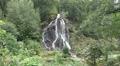 Waterfall in low mountain range Harz forest HD Footage