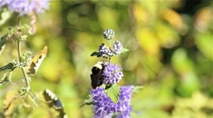 Macro purple flowers and bee Stock Footage