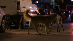 Three stray dogs in the street at night Stock Footage
