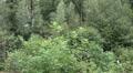 Waterfall pan in low mountain range Harz HD Footage