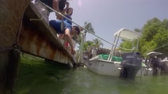 Robbies tourists feeding tarpon in islamorada in the florida keys Stock Footage