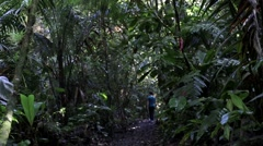 Rainforest with man exploring in the distance Stock Footage
