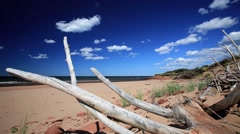Time lapse of beach with driftwood on Prince Edward Island Stock Footage