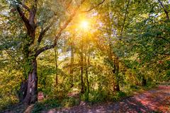 Sun in the autumn forest Stock Photos