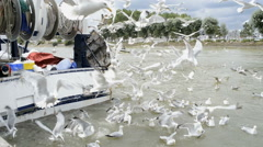 Seagulls catching a fish outside a boat,Trouville Sur Mer, France Stock Footage