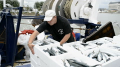 TROUVILLE SUR MER, FRANCE - JULY 28, 2014: Fresh fish being landed and weighed o Stock Footage