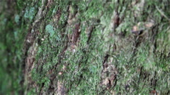 Close up Baum/Tree with Pan / Schwenk Stock Footage