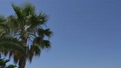 Mediterannean Palm Tree Background 4K Stock Footage