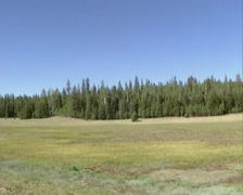 Meadow bordered with spruce-fir forest at Grand Canyon north rim - vehicle shot Stock Footage