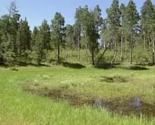 Greenland Lake, Grand Canyon north rim - pan Stock Footage