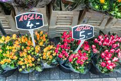 autumn flower bouquets on farmer agricultural market, germany - stock photo