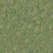Grassplot with Green and Yellowed Grass. - stock photo