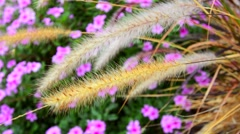 Willows in flower bed Stock Footage