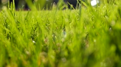 Bright vibrant green grass close-up Stock Footage