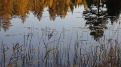 Lake with rushes and reflected trees - stock footage