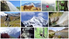 Stock Video Footage of Alps montage. Landscapes, animals and people into the wild