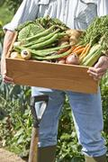 close up of man on allotment with box of home grown vegetables - stock photo