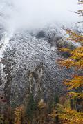 Austria, Salzburg State, Hallstatt, trees after a windfall - stock photo
