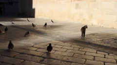 Cat and Doves on street of old town in Dubrovnik Stock Footage