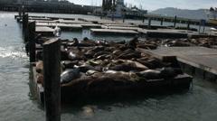 California sea lions on peir 39 Stock Footage